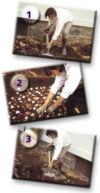 Πώς να φυτεύετε βολβούς - Βήματα