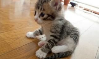 Το γατάκι σας έρχεται σπίτι