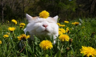 Σχεδιάστε έναν κήπο φιλικό προς τη γάτα σας