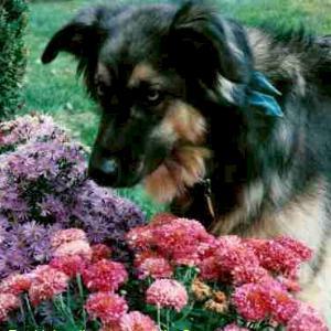 Μοιραστείτε τον κήπο σας με τον σκύλο σας