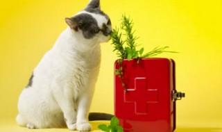 Βότανα σαν εντομοαπωθητικά για κατοικίδια