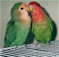 Παπαγαλάκια: Το πιο ιδανικό ζευγάρι