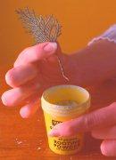 4. Βυθίστε το τακουνάκι σε ορμόνη ριζοβολίας