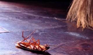 Πώς θα διώξω και να γλιτώσω από τις κατσαρίδες μια και καλή