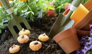 Δημιουργήστε ένα πετυχημένο κήπο φυτεύοντας βολβούς την άνοιξη