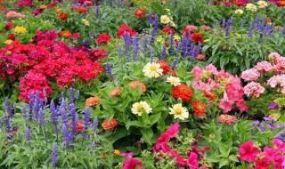 annuals_garden