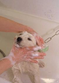 Το μπάνιο του σκύλου σας