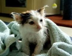 Γάτες και πλύσιμο. Πόσο απαραίτητο είναι το μπάνιο στη γάτα μας;