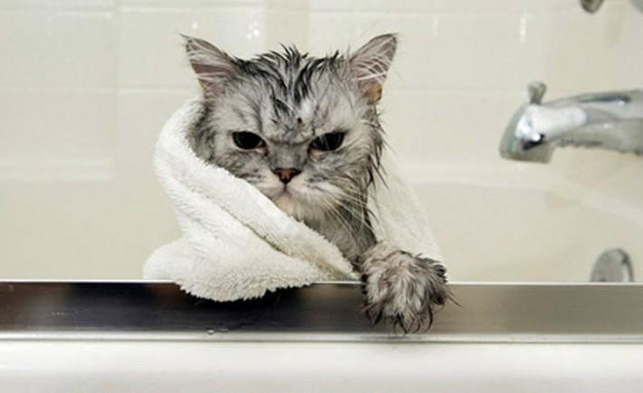 Γάτες και πλύσιμο. Πόσο απαραίτητο είναι το μπάνιο στη γάτα μας