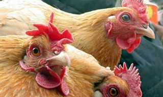 Η οργανική λίπανση και η γρίπη των πτηνών