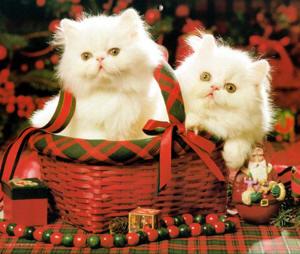 Τα κατοικίδια δεν αποτελούν χριστουγεννιάτικο δώρο
