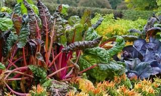 Διακοσμητικός λαχανόκηπος