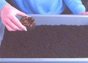 Πώς να καλλιεργήσετε μπιγκόνιες από κόνδυλο