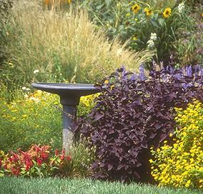 Δημιουργήστε έναν κήπο φιλικό στα πουλιά