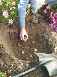 Τι χρειάζονται οι βολβοί φθινοπωρινής φύτευσης και ανοιξιάτικης ανθοφορίας.