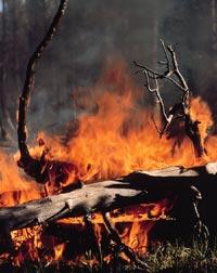 Σώστε τα δάση μας
