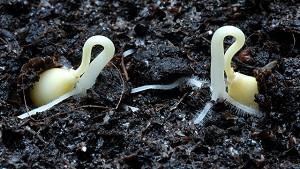 Καλλιεργήστε τροπικά φυτά από σπόρο