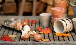Τι χρειάζονται οι βολβοί φθινοπωρινής φύτευσης και ανοιξιάτικης ανθοφορίας