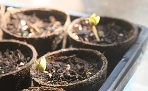 Βλαστική ικανότητα. Τι χρειάζονται οι σπόροι για να φυτρώσουν.