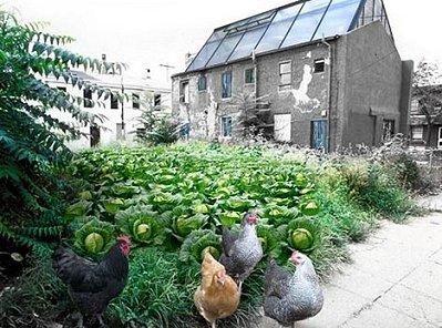 Ιδέες αστικής γεωργίας. Πώς θα γίνετε αγρότες των πόλεων