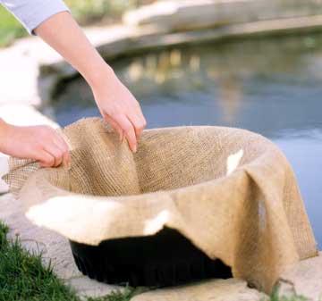Πώς να καλλιεργήσετε νούφαρα
