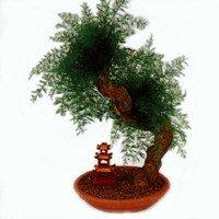 Σύνθεση bonsai με neptunus