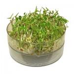 Σύστημα βλάστησης φύτρων Bio-Sprouter με δύο πιάτα δίσκους