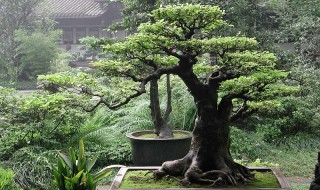 Bonsai - Ιστορία και προέλευση