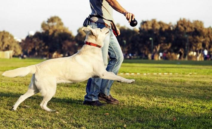 Πώς να φροντίσετε τον σκύλο σας