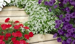 Φυτέψτε ετήσια ανθοφόρα φυτά εδαφοκάλυψης