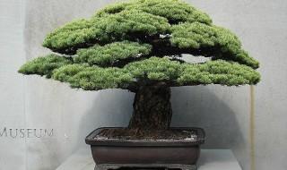 Bonsai - Η τέχνη της Ιαπωνίας