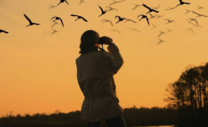 Παρατηρώντας πουλιά