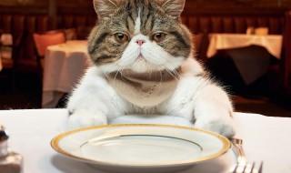 Γάτες: οι γαστρονόμοι του ζωικού βασιλείου!