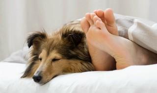 Είναι σωστό τα κατοικίδια να κοιμούνται στο κρεβάτι μας;