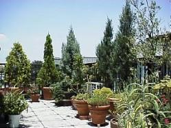 roofgarden11a