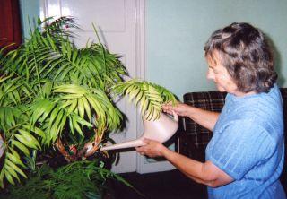 Houseplants2