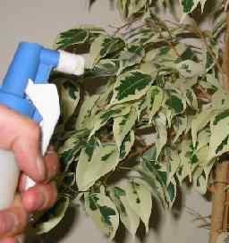 houseplant_health_2