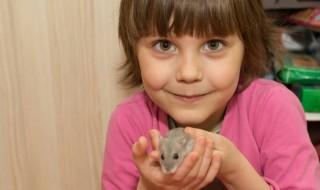Χάμστερ: Ιδανικό κατοικίδιο για τα παιδιά αλλά με κρυφούς κινδύνους