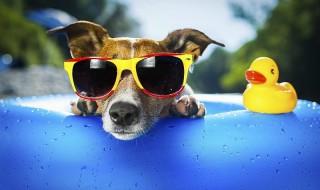 Φεύγετε διακοπές; Τι θα γίνει με τα κατοικίδιά σας;