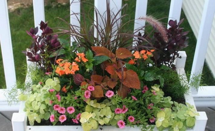 Κηπουρική σε δοχεία