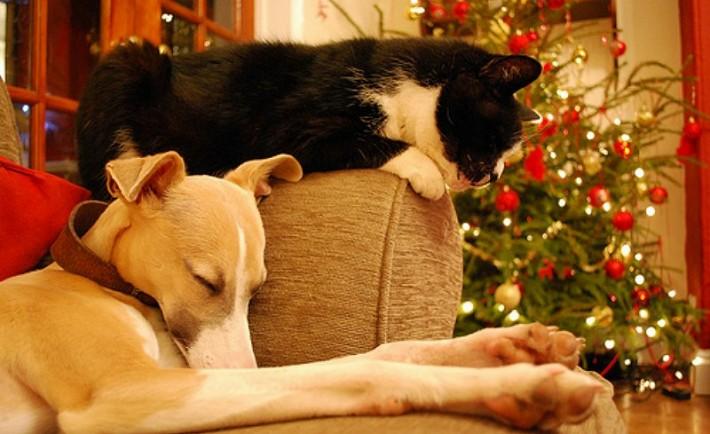 20 οδηγίες για την ασφάλεια των οικόσιτων φίλων μας τα Χριστούγεννα