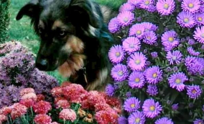 Μοιραστείτε τον κήπο σας με τον σκύλο σας Ο κήπος μου και ο σκύλος μου
