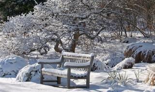 Χιόνι στον κήπο μας