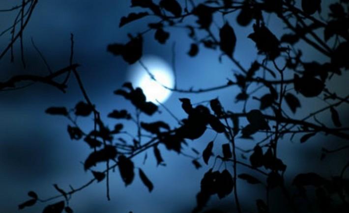 Βιοδυναμική κηπουρική. Φυτεύοντας παρέα με το φεγγάρι