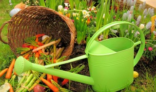 Φυτέψτε λουλούδια μαζί με λαχανικά