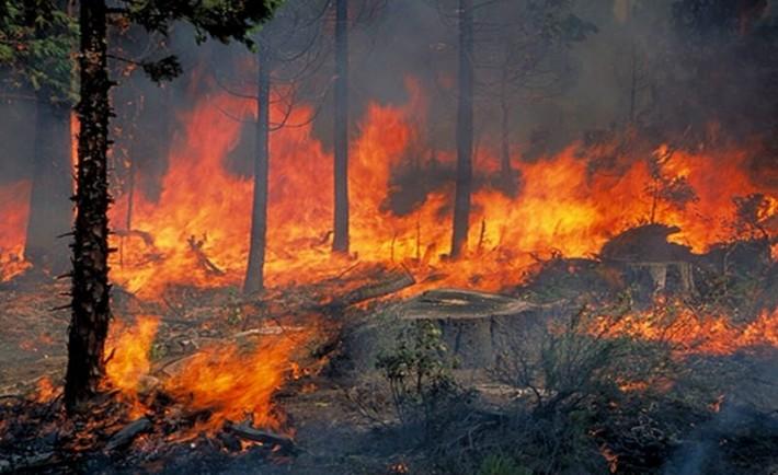 Σώστε τα δάση μας για καλύτερη ποιότητα ζωής, για μακροβιότερο πλανήτη γη