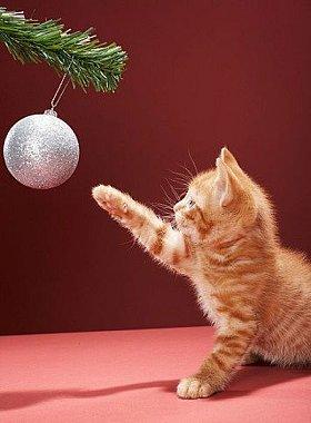 Συμβουλές ασφάλειας για Χριστούγεννα χωρίς ατυχήματα