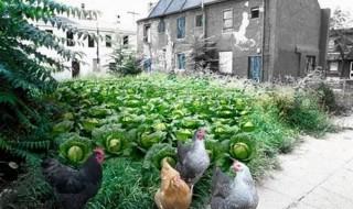 Πώς θα γίνετε αγρότες των πόλεων