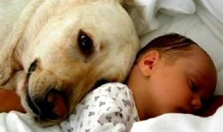 Οι σκύλοι προστατεύουν τα βρέφη από λοιμώξεις