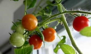 Καλλιεργήστε λαχανικά σε εσωτερικό χώρο
